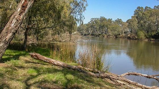 Drought update_Howlong NSW_ Murray Riverv2