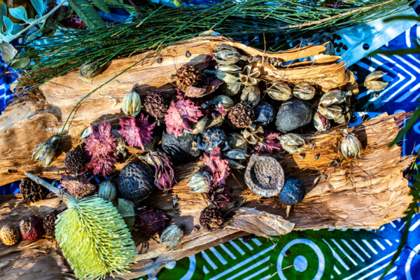 Eco tours pic: food sources and medicinal plants shown on Unkya Cultural Eco Tours at Gaagal Wanggaan (South Beach) National Park, Scotts Head (Destination NSW)